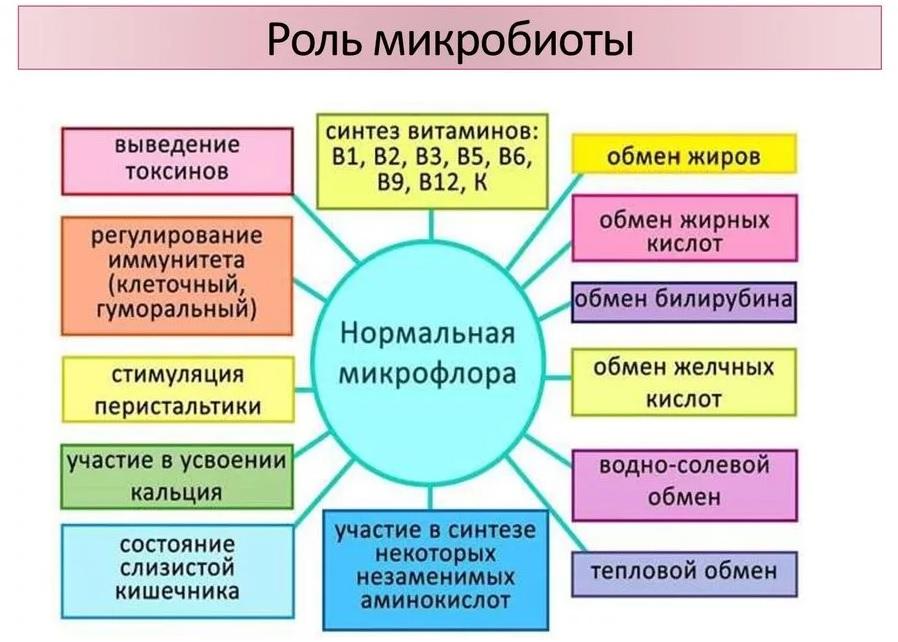 Полезная микрофлора кишечника