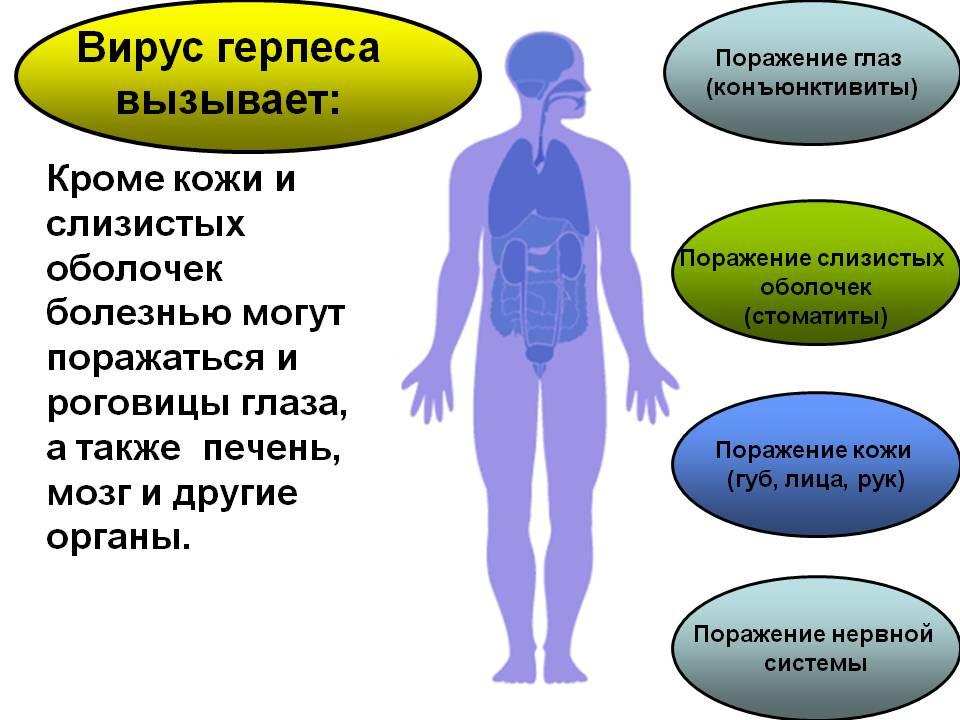 Вирус герпеса 1 и 2 типа