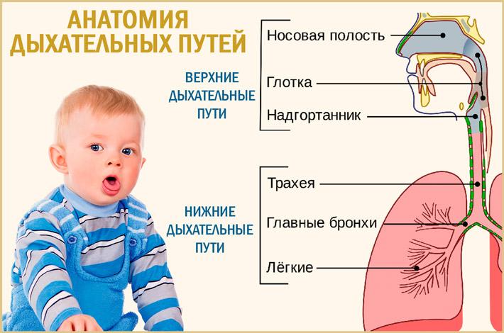 Инфекции дыхательных путей