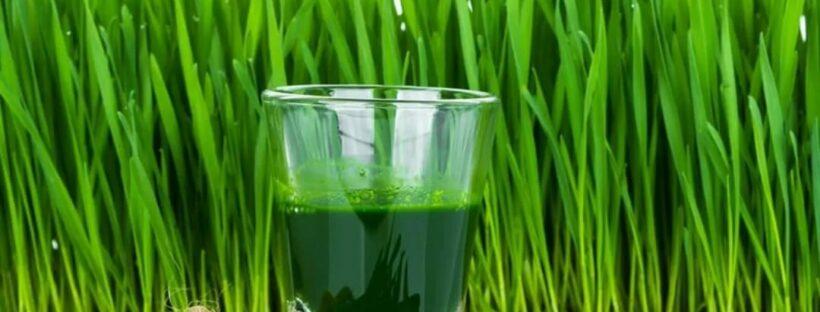 Хлорофилл жидкий польза